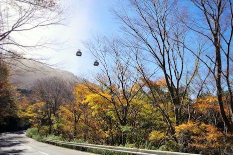 大涌谷直下の紅葉