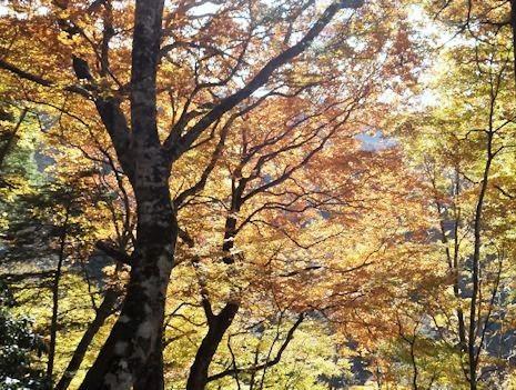 檜洞丸の紅葉1