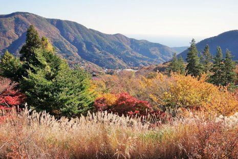 早雲山の紅葉