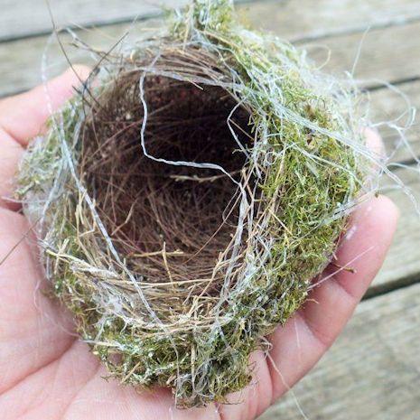 メジロの巣1
