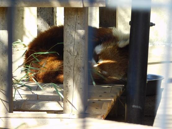 市川市動植物園でレン君のお姉ちゃんルルに再会!