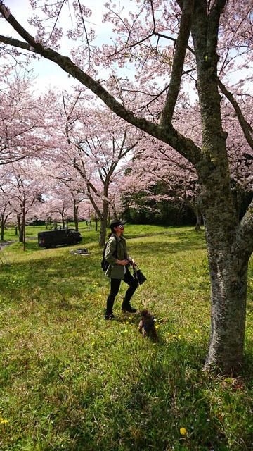 2017年4月のお花見サキコ
