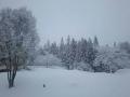 SNOW1122.jpg
