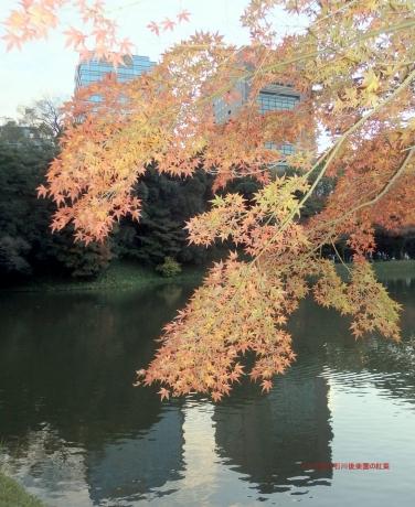 '171123 水辺の紅葉 小石川後楽園