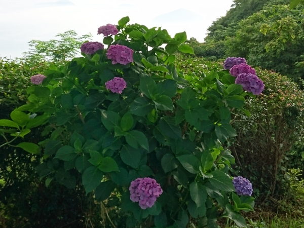 紫雲出山15