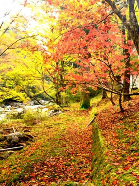 山荘裏の紅葉