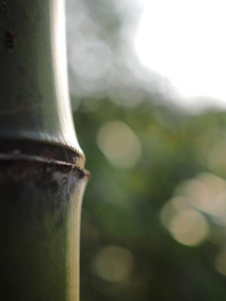竹30mm