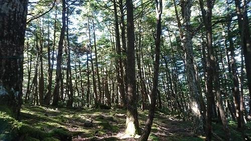 木漏れ日がきれい