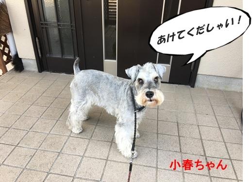 小春ちゃん2017年10月11日