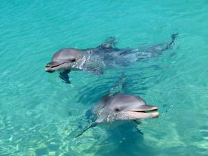 dolphin-2994491_1280.jpg
