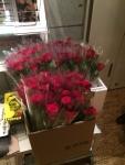 ユーロスペースのプレゼント用赤いバラ