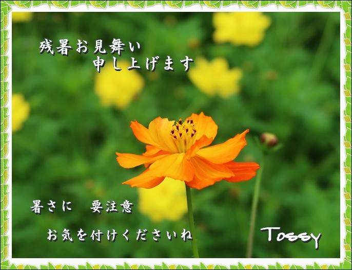 zannsyo_cosmos.jpg