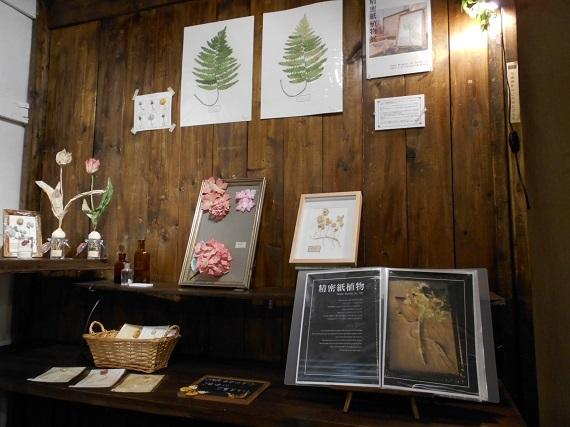 精密紙植物展 2017 727