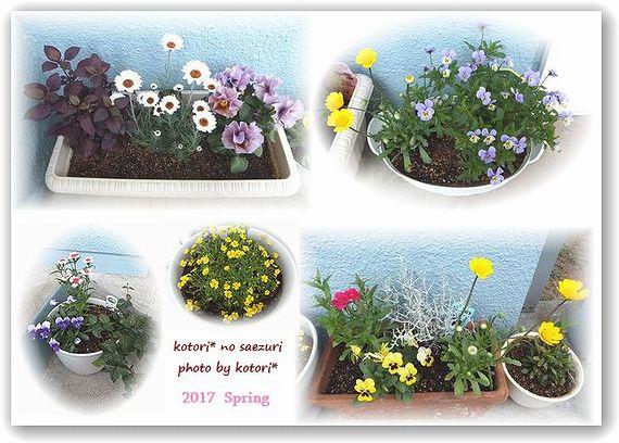 植えたお花たち