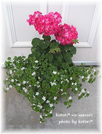 GWに植えたお花たち