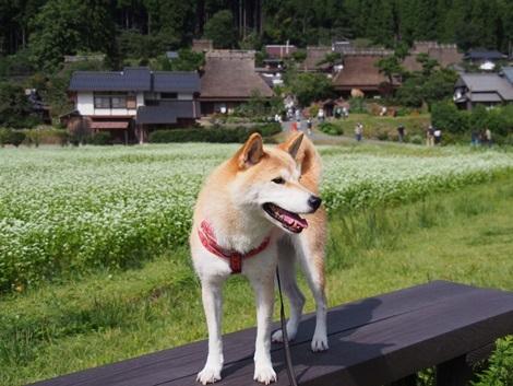 美山にて♪