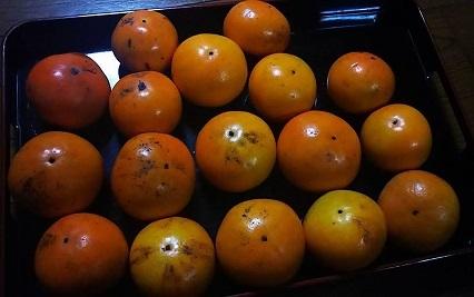 平成29年11月7日柿