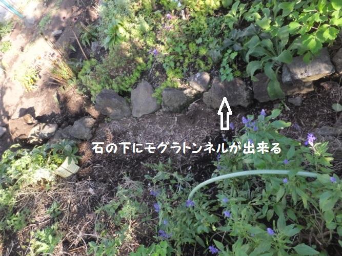 DSCF4345_1.jpg