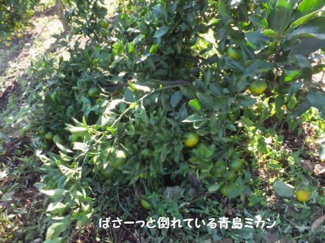 DSCF4427_1.jpg