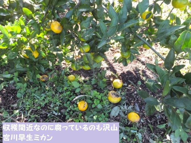 DSCF4428_1.jpg