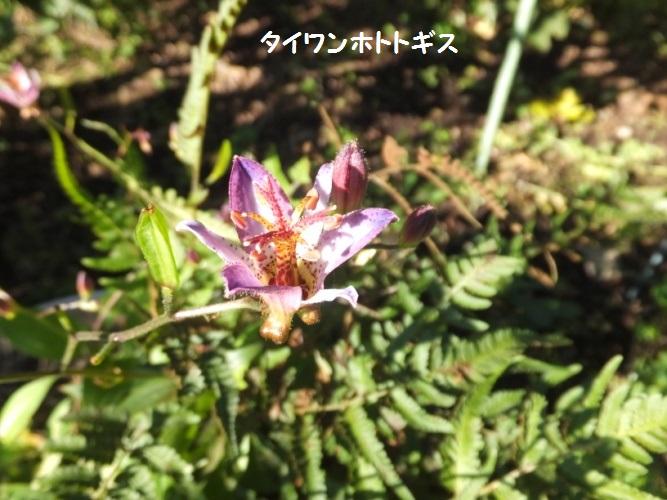 DSCF4430_1.jpg