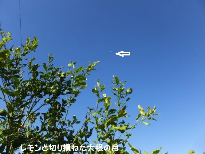 DSCF4432_1.jpg