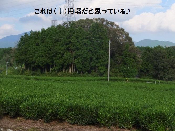 DSCF4446_1.jpg