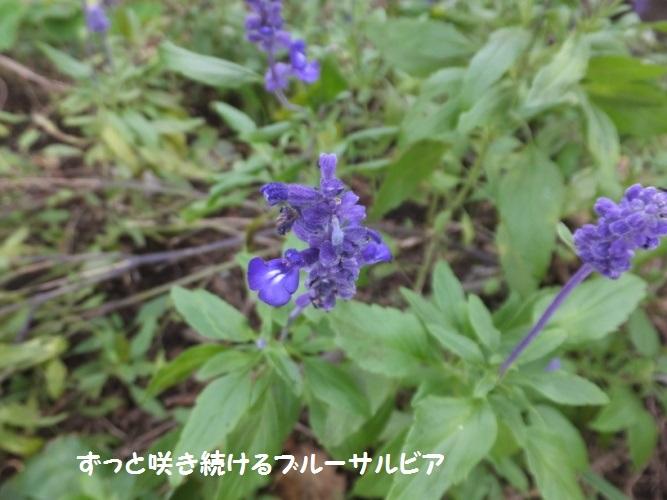DSCF4575_1.jpg