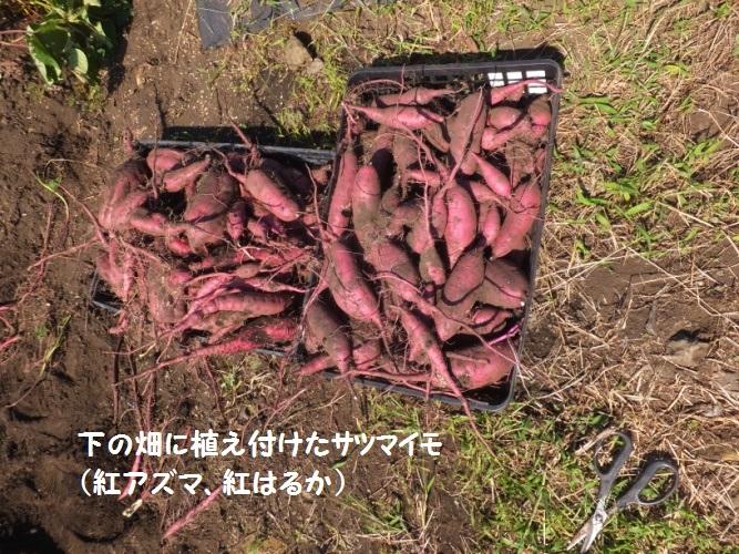 DSCF4683_1.jpg