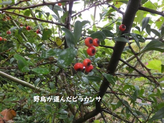 DSCF4810_1.jpg