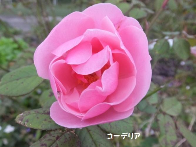 DSCF4959_1.jpg