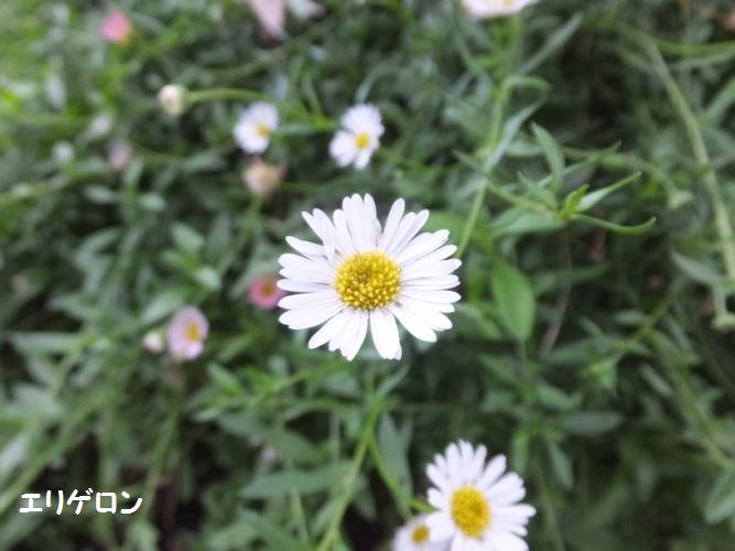 DSCF4960_1.jpg