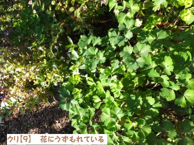 DSCF5009_1.jpg