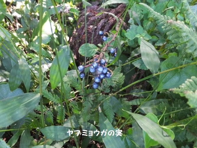 DSCF5168_1.jpg