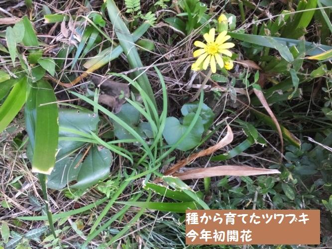 DSCF5196_1_20181025192455ed8.jpg