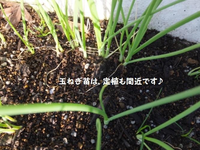 DSCF5400_1.jpg