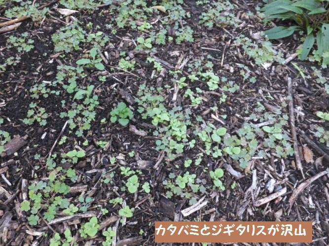 DSCF5461_1.jpg