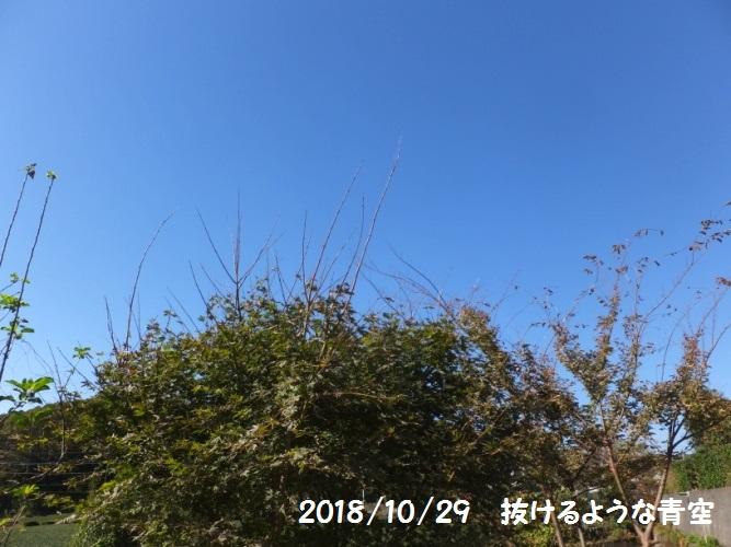 DSCF5473_1.jpg