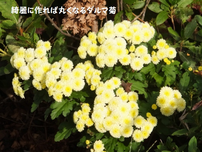 DSCF5518_1.jpg