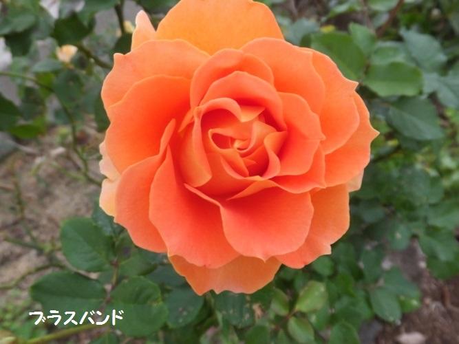 DSCF5987_1.jpg