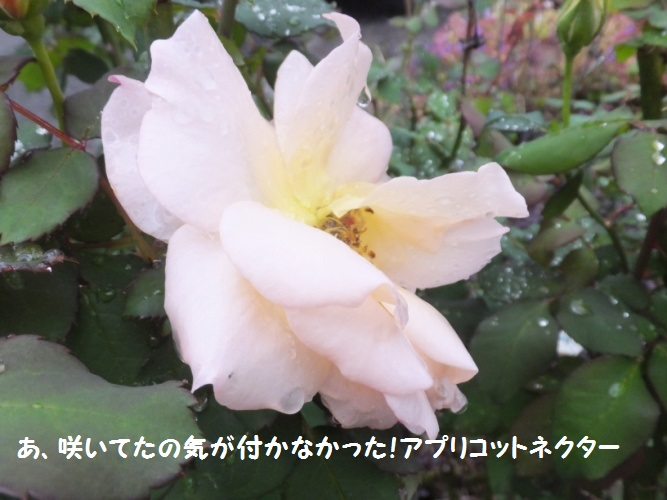 DSCF6036_1.jpg