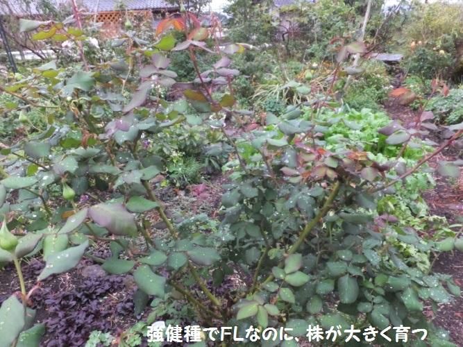 DSCF6037_1.jpg
