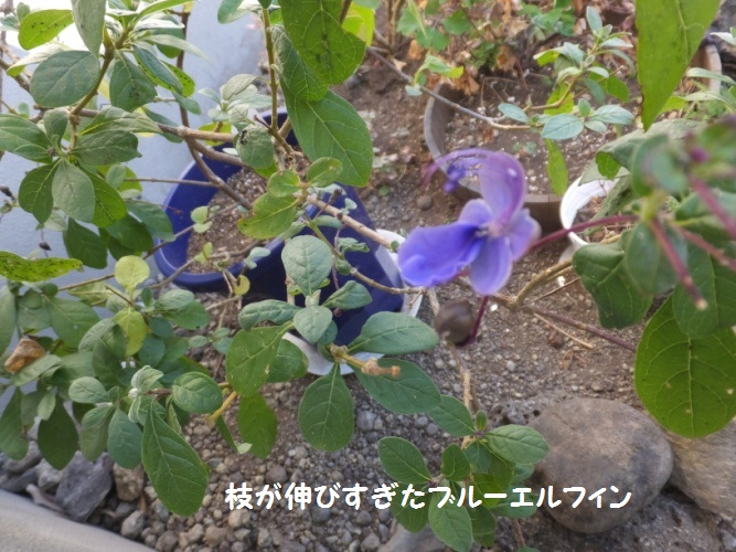 DSCF6078_1.jpg