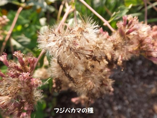 DSCF6139_1.jpg