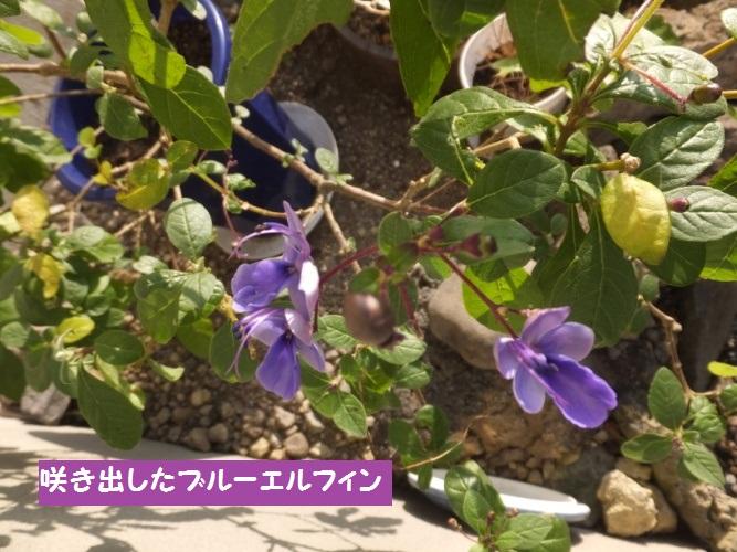DSCF6140_1.jpg
