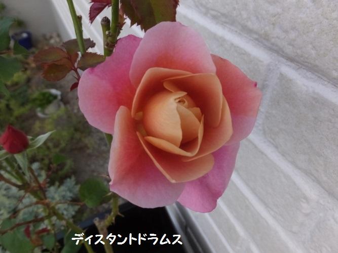 DSCF6147_1.jpg