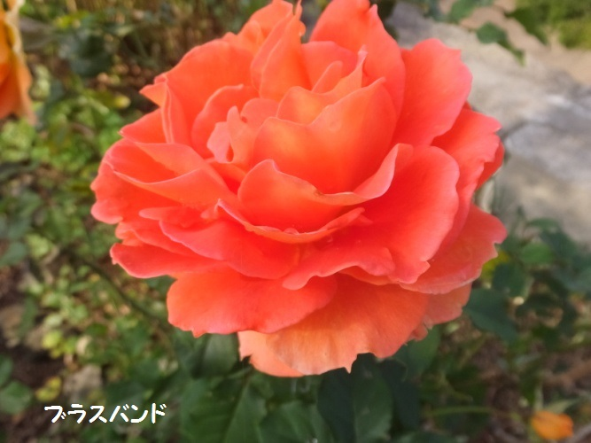 DSCF6157_1_20181112084645d53.jpg