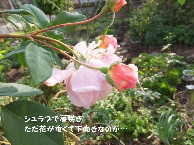 DSCF6158_1.jpg