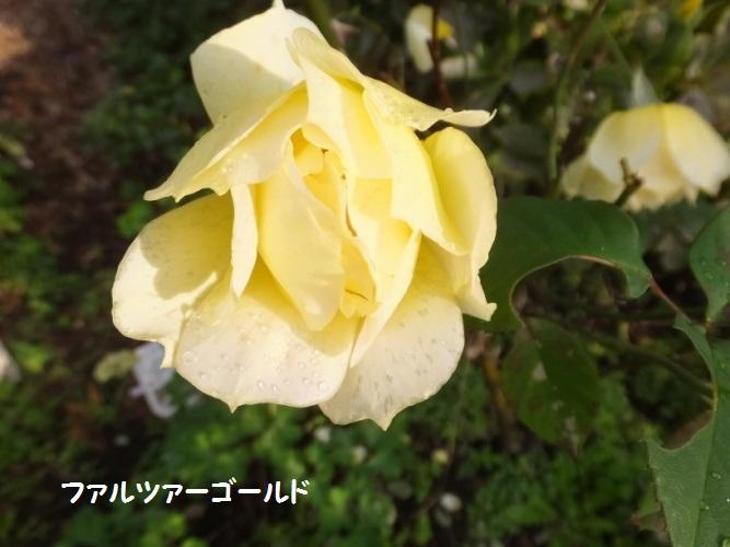 DSCF6159_1.jpg