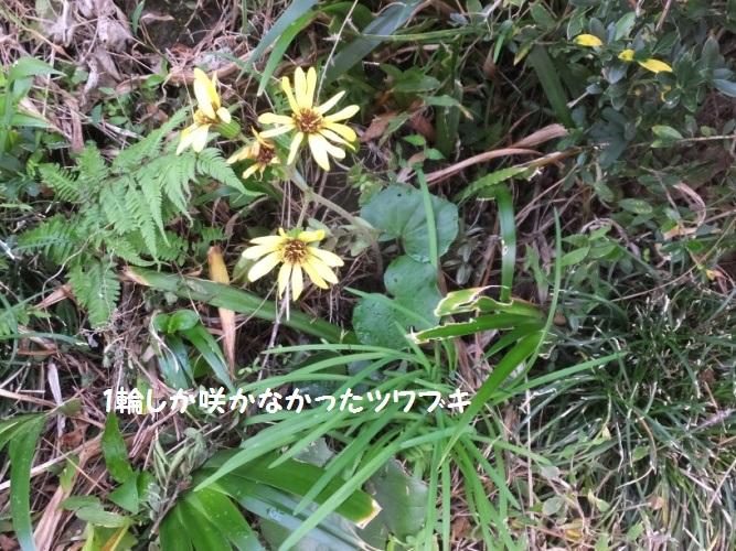 DSCF6170_1.jpg